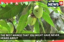 The best Mango That You Might Have Never Heard About!