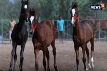 Passports, DNA Tests and Unique IDs for Kathiawari War Horses in Gujarat