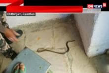 Cobra Found in Rajasthan School