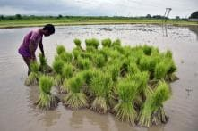 Modi Cabinet Approves Steep Hike in MSP for Kharif Crops