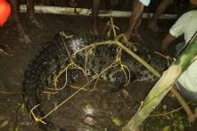 Kerala Man Returns to Find Crocodile Lounging in His Flooded Home