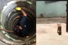 These Animal Lovers in Chennai Rescued a Cat Stuck Deep Inside a Well in Just 2 Minutes
