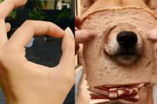 Forget Kiki and Momo, Adorable Pets Taking the #SnootChallenge is What We Need