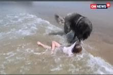 Dog Rescues A Little Girl From The Ocean