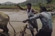 Telangana Farmer, Actor Become Internet Sensations After Viral 'Kiki Challenge' Video