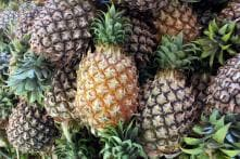 Pineapples Stuffed With 67 Kg of Cocaine Seized From Market in Madrid