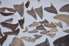 8,000 kg of Shark Fins Bound for China Seized from Mumbai, Gujarat