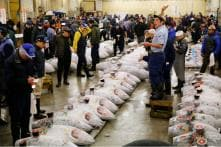 World's Largest Fish Market Reopens at New Site in Tokyo