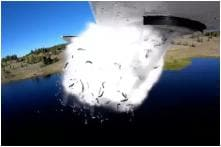 Bizarre Video of Fish Being Dropped into a Lake in Utah Has Social Media Enthralled