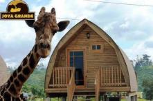 Set Up by Wealthy Drug Traffickers, Garden of Eden-like Zoo Struggles to Stay Afloat After Creators' Arrest