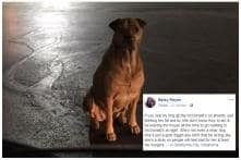 'Gold Digging' Dog Pretends to be Stray to Get Free Burgers from McDonald's