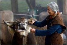 With or Without Horns? Switzerland Votes on Sunday to Decide Future of Cows