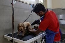Delhi's Pampered Pooches Get Clean Air as People Choke on Smog