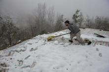 J&K Farmers a Worried Lot as Record-breaking Snowfall Damages Apple Orchards