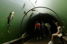 China to Build First Underwater Bullet Train Tunnel Costing $3 Billion