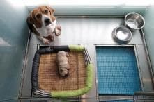 Two of a Kind: China's First Pet Cloning Service Duplicates Star Pooch