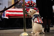 PICS: George H Bush's Service Dog, Sully, Honors the Late President