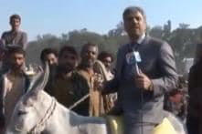 Pakistani Journalist Rides a Donkey While Reporting and the Internet Wants to Give Him an Award