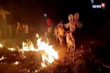 Karnataka Festival: Farmers Carry Livestock Over Burning Field For Good Fortune