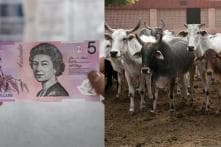 A Hindu Organization Is Urging Reserve Bank Of Australia to Print 'Beef-Free' Currency