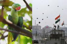 Kai Po Che? Picture Of A Dead Parrot Caught In A Kite String Noose During Makar Sankranti Is Heartbreaking