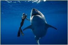 When 'Deep Blue', The World's Biggest Great White Shark, Drops in for a Photoshoot