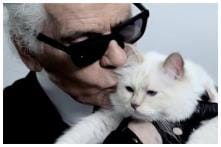 Karl Lagerfeld's Cat Choupette Set to Inherit a Chunk of the Fashion Designer's Fortune