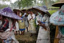 Pregnant Women Are Risking Their Lives in Assam for Your Morning Cup of Tea