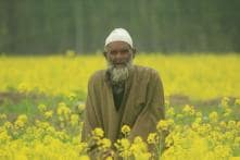 Come See South Kashmir's Mustard Blossoms Before Summer Beckons You