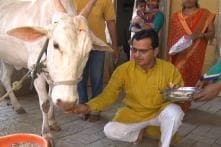 This Maha Doc Leaves Hosp Job for Better Cow Breed and Cancer-free India, Banks on Polls for Change