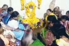 This video of a Monkey Consoling a Grieving Woman in Karnataka Has Gone Viral