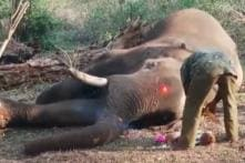 39-Year-Old Elephant Who Carried 'Golden Howdah' for Record 18 Years Dies