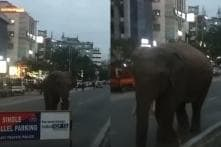 Wild Elephant Walks Down Guwahati Road, Stalls Traffic For Hours