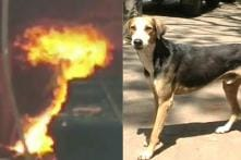 Brave Dog Dies While Saving UP Residents From a Burning Building, is Hailed a Hero