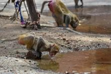 While Gujarat Burns in Sweltering Heat, Ice slabs, Fruits and Glucose Keep Animals Cool in Zoo