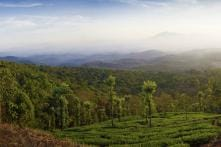 Wayanad Wanderlust: The Land of Paddy Fields is Fertile Poll Pitch This Election Season