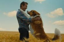 A Dog's Journey Movie Review: Emotionally Engaging But Cliched