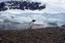 Follow the Penguin Poop: Life in Antarctica Thrives on Feces of its 'Residents'