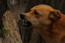 Delhi Man Arrested for Killing Stray Dog in a Fit of Rage After it Attacked His Wife