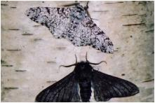 UK Charity Launches Campaign to Change Public's Negative Perception of Moths
