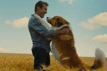 As 'A Dog's Journey' Releases, Here are 5 Films Every Dog-lover Should Watch This Weekend