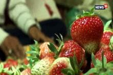 Strawberries Make Early Entry In Market Due To Favourable Climate In Srinagar