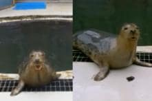 Researchers Teach Seals To Sing 'Star Wars' Theme and 'Twinkle, Twinkle, Little Star'