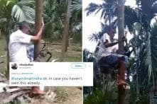 Indian Farmer Comes Up With 'Tree Bike' to Climb Coconut Trees, Twitterati Hails his Innovation