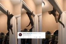 Move Over Parkour Artists, This Viral Cat is Giving Everyone Some Serious Competition
