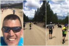 'Disinterested' Bear Crosses the Path of Stunned Marathon Runners in US Like a Boss