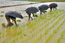 Summer Crop Planting Down Nearly 7% as India Receives Below Average Monsoon Rains: Report