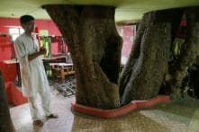 Not Willing to Cut 150-Year-old Tree, MP Family Rebuilds House and Now Lives Around it