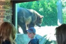 Watch: Unable to 'Bear' it Any Longer, Grizzly Scratches Away an Annoying Itch at US Zoo