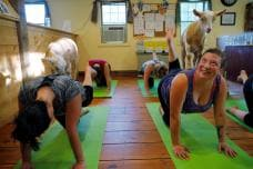 In Photos: Yoga with Goats